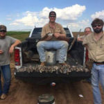 Dove Hunting Texas