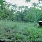 Kansas Hunting Texas